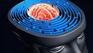 كيف تعمل الذاكرة البشرية