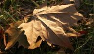 طرق لتفادي ضغوط الخريف