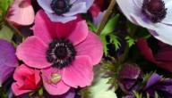 معاني بعض أنواع الزهور الربيعية