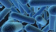 ما هي بكتيريا باسلس سيرس