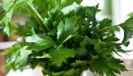 أعشاب مفيدة تستخدم في المطبخ و يمكن زراعتها على نوافذنا
