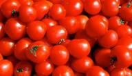 ما هو الفرق بين الطماطم والبندورة