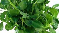 فوائد نبات البقلة وحقيقة علاجها لمرض السرطان