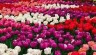 ما الفرق بين الأزهار و الورود