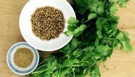 فوائد بذور الكزبرة المميزة