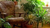 نباتات الزينة الداخلية واسمائها