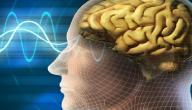 كيف يعمل الدماغ البشري