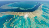 ما هو الحيد المرجاني العظيم