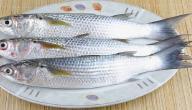 معلومات عن سمك البوري