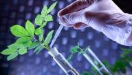الهرمونات النباتية ووظائفها