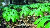 الفرق بين النباتات اللاوعائية والنباتات الوعائية