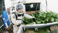 معلومات عن زراعة الفضاء