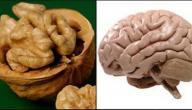 فوائد الجوز للدماغ