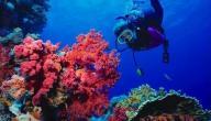 فوائد المرجان الطبية