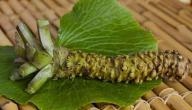 استخدامات نبات الوسابي