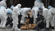 أعراض إنفلونزا الطيور عند الإنسان