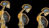 أسباب هشاشة العظام