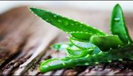 علاج شرخ المستقيم بالأعشاب