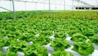 خطوات الزراعة المائية