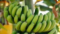 فوائد الموز الأخضر للرجيم