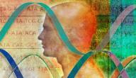 كيف يتم تحديد الصفات الوراثية