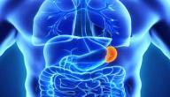 أهمية الطحال في جسم الإنسان