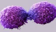 الفرق بين الخلايا العادية والخلايا السرطانية