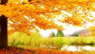 موضوع تعبير عن وصف الطبيعة في فصل الخريف