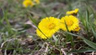 علاج الكيس الدهني بالأعشاب