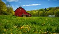 موضوع تعبير عن الريف