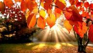 معلومات عن الاعتدال الخريفي