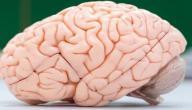 أعراض الصرع عند الكبار