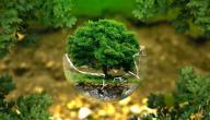طرق الحفاظ على البيئة