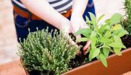 طرق علاج التهاب الجهاز التنفسي العلوي بالأعشاب
