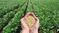 معلومات عن الزراعة العضوية