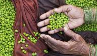 فوائد الحمص الأخضر