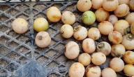 معلومات عن فاكهة البمبر