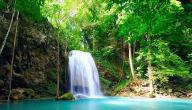 معلومات عن الغابات الاستوائية