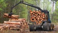 قطع الأشجار وتأثيرها على البيئة