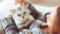 أعراض جرثومة القطط عند الحامل