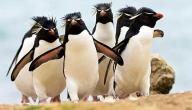 معلومات عن حياة البطريق