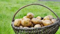 طريقة حفظ البطاطس