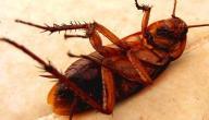 طرق مكافحة الحشرات الطائرة