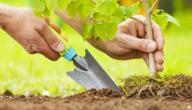 تعبير عن زراعة الأشجار
