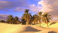 تعبير عن تعمير الصحراء