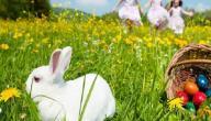 بحث عن الربيع
