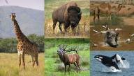 لماذا سميت الثدييات بهذا الاسم