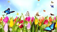 موضوع تعبير عن الربيع للصف الرابع
