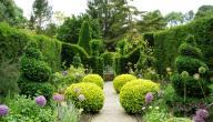 موضوع تعبير عن أهمية الحدائق للصف الرابع