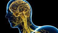 مكونات الجهاز العصبي المركزي